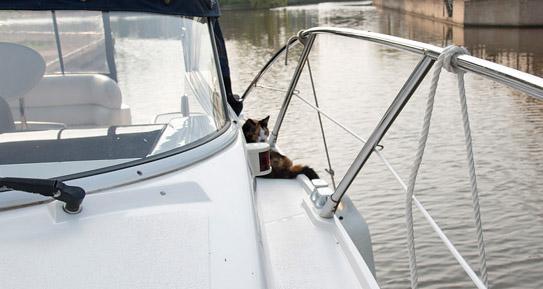 Die Katze auf dem Gangbord