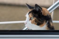 Tierischer Besuch in Bolsward – Katze an Bord