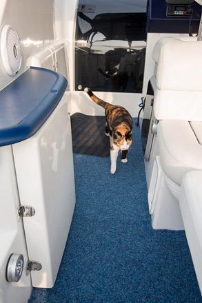 Katze auf dem Schiff