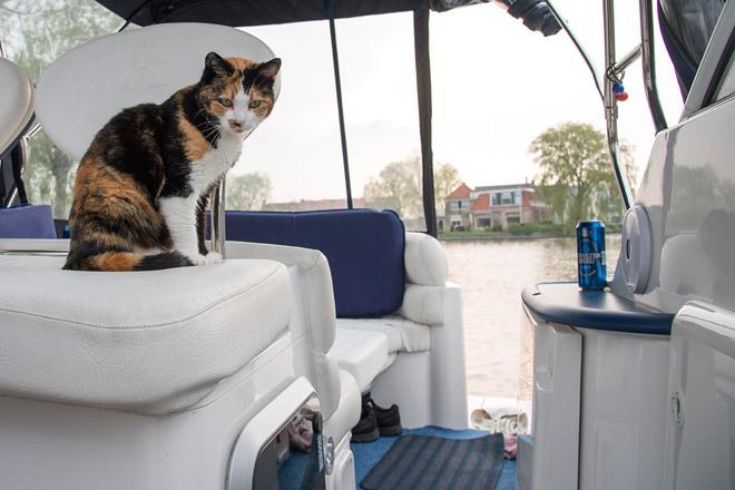 Katze an Bord